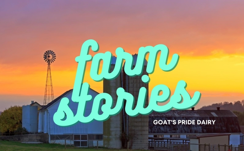 Farm Stories – Goat's Pride Dairy
